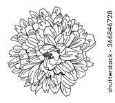 elegant decorative... | Shutterstock .eps vector #366846728