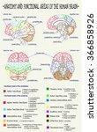 vector diagram of anatomy of... | Shutterstock .eps vector #366858926