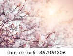 Blooming Tree With Pink Flower...