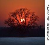 Oak Tree In The Field Against...