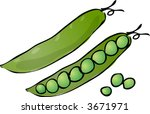 sketch of peas in a pod hand... | Shutterstock .eps vector #3671971