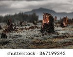 stumps on the valley caused by... | Shutterstock . vector #367199342