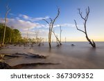 mangrove trees on the beach at...
