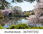 Постер, плакат: The pond and Cherry blossom