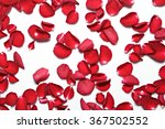 Stock photo beautiful red roses petals on white background valentine s day anniversary etc background 367502552