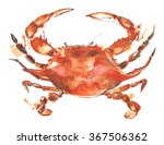 Crab Watercolor Painting...