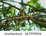 Small photo of Cinnyris jugularis,Green-tailed Sunbird; Aethopyga nipalensis