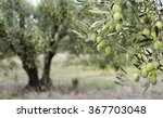 Greek Olive Grove Detail