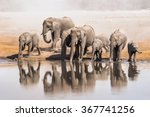 Family Of African Elephants...