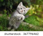 Stock photo gray little kitten playing on the garden 367796462