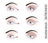 three types of eyelids  down... | Shutterstock .eps vector #367814642