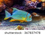 colorful tropical exotic fish...   Shutterstock . vector #367837478