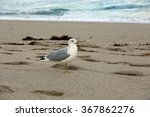Healthy seagull on the beach in South Florida - stock photo