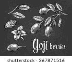 goji berries on a branch....   Shutterstock .eps vector #367871516
