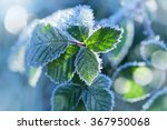 the frost on the leaves | Shutterstock . vector #367950068