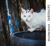 Small photo of Alley cat/Stray cat with injured ears standing on rim of garbage bin