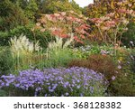 Lavender Blue Asters  Pampas...