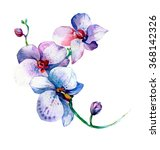 the new view of orchid... | Shutterstock . vector #368142326
