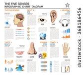 the five senses infographic... | Shutterstock .eps vector #368186456