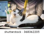 Stock photo cat on the computer table 368362205