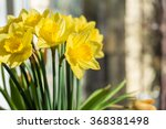 April Blooming Narcissi Flower...