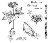 ginseng  botanical drawing.... | Shutterstock .eps vector #368426936