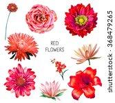 Illustration Of Beautiful Red...