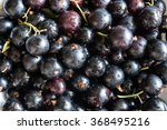 The Washed Blackcurrant Berrie...
