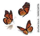 Stock photo beautiful three monarch butterfly isolated on white background 368626856