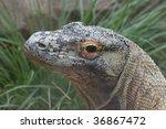kimodo dragon's head   Shutterstock . vector #36867472