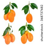 Sweet Marian Plum Thai Fruit...