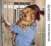 dog in shelter | Shutterstock . vector #368812658