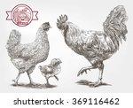 sketch of brood hen | Shutterstock . vector #369116462