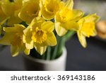 Small photo of April blooming Narcissi flowers arranged in vase for interior Daffodil, yellow spring flower in the Amaryllidaceae amaryllis family. Used for fragrances, medicinal plant as traditional medicines