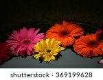 colorful flowers in the water | Shutterstock . vector #369199628