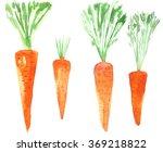 set carrots. watercolor food....   Shutterstock . vector #369218822