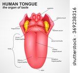 realistic human tongue structure | Shutterstock .eps vector #369238316