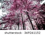 Pink Forest  Abstract Nature...