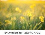 yellow field rapeseed in bloom... | Shutterstock . vector #369407732