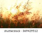 blurry sunset with  grass | Shutterstock . vector #369429512