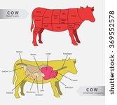 basic cow internal organs and... | Shutterstock .eps vector #369552578