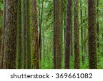 Sol Duc Rainforest At Olympic...