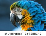 blue and yellow macaw  lat. ara ... | Shutterstock . vector #369688142
