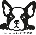 french bulldog head | Shutterstock .eps vector #369721742