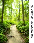 way in green forest near the...   Shutterstock . vector #36988576