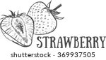 hand drawn sketch strawberry.... | Shutterstock .eps vector #369937505