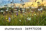 old wild flower hay meadow in... | Shutterstock . vector #369970208