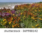 Small photo of Wild wallflower and Hoary Stock on the top of a cliff on the coast