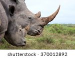 a close up of a female rhino  ... | Shutterstock . vector #370012892