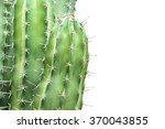 Close Up Cactus Isolated On...